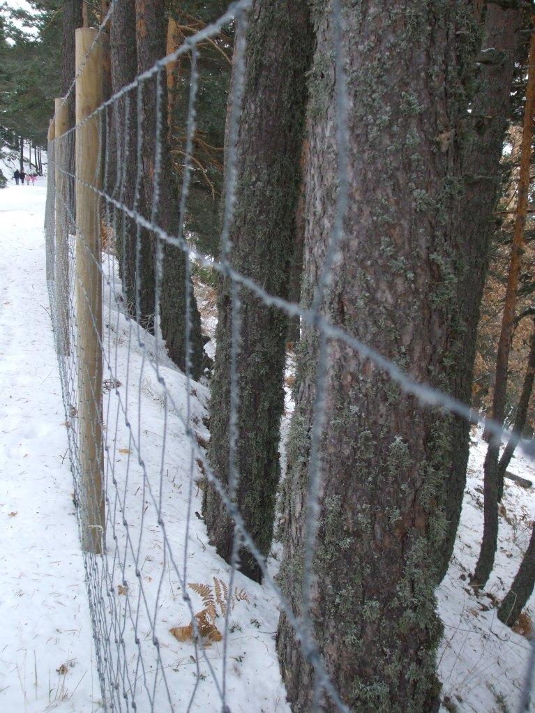 nieve sobre alambres
